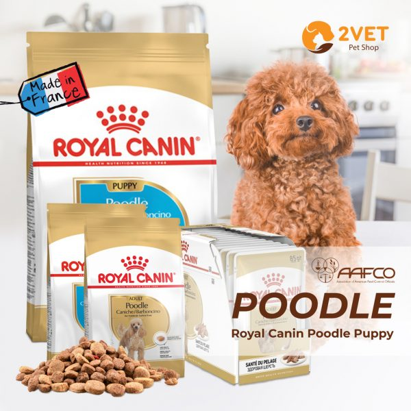 royal-canin-poodle-puppy-adult-cac-loai
