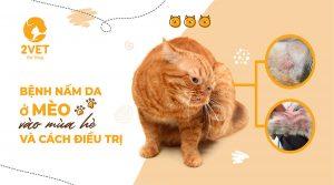bệnh nấm da ở mèo